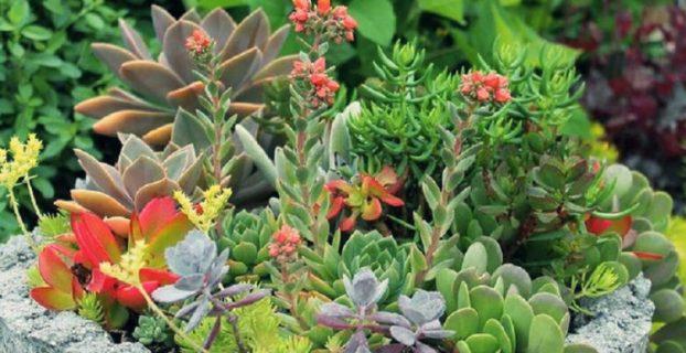 Tipos de plantas suculentas que existen en el mundo1